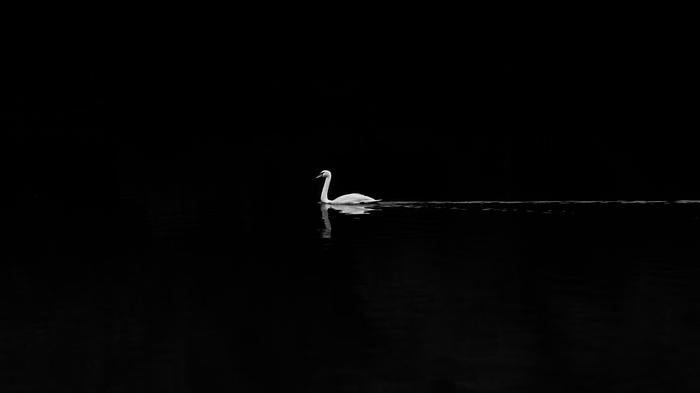 Лебедь Белый лебедь, Минимализм