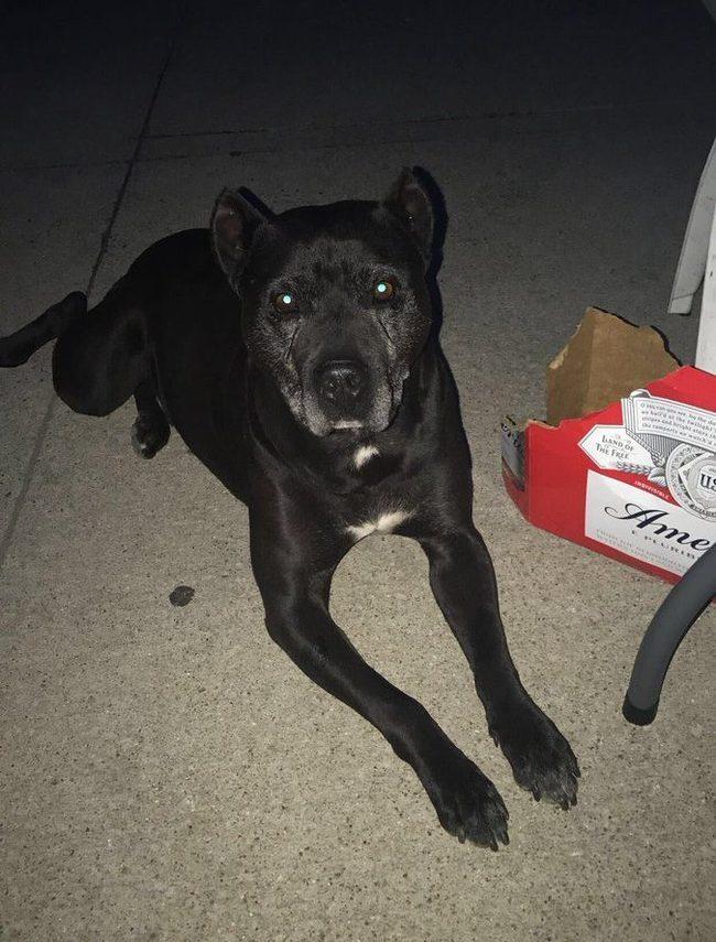 Мексиканка из Детройта назвала собаку Негро. Теперь миллениалы считают испанский язык расистским. Собака, Испанский язык, Черный, Twitter, Политкорректность, Маразм, Длиннопост