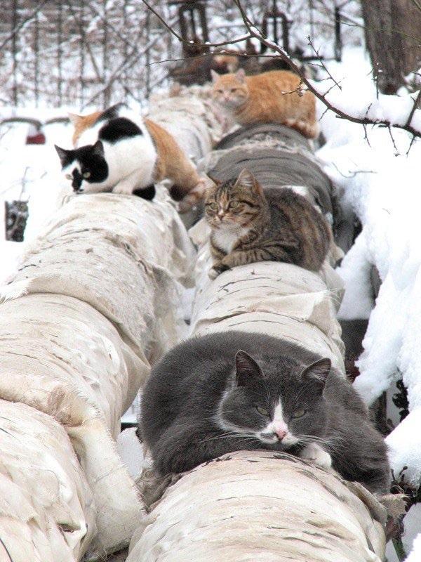 Настроение: серый котик
