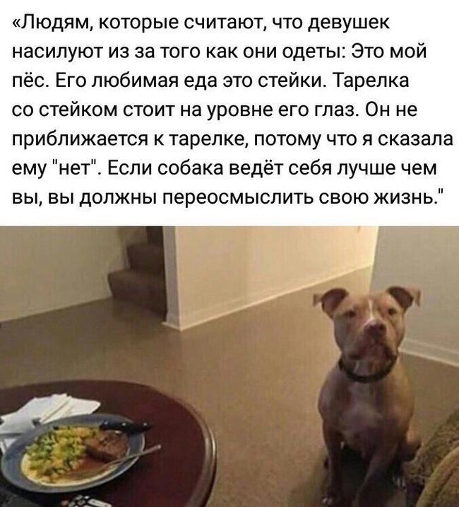 Собака Насилует Порно