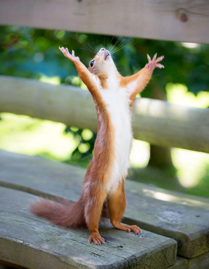 """Обмен подарками от Миррочки """"ЗАКРЫТ"""". 01.02.2018 год. Обмен подарками, Хороший конец, Счастье, Итоги, Длиннопост"""