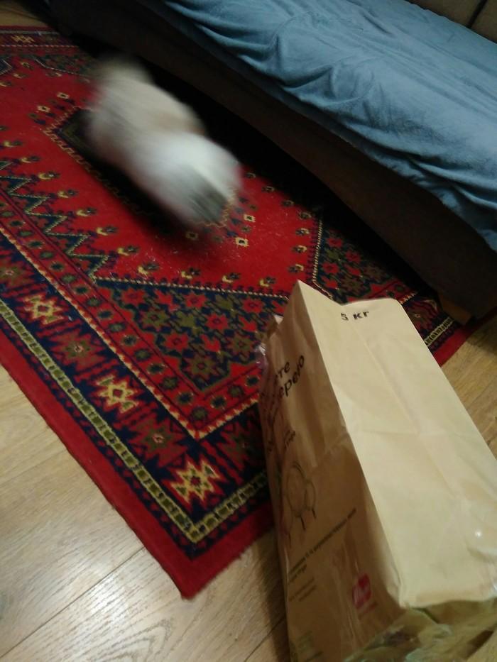 Когда принесли чудесный пакетик Кот, Пакет, Удовлетворение