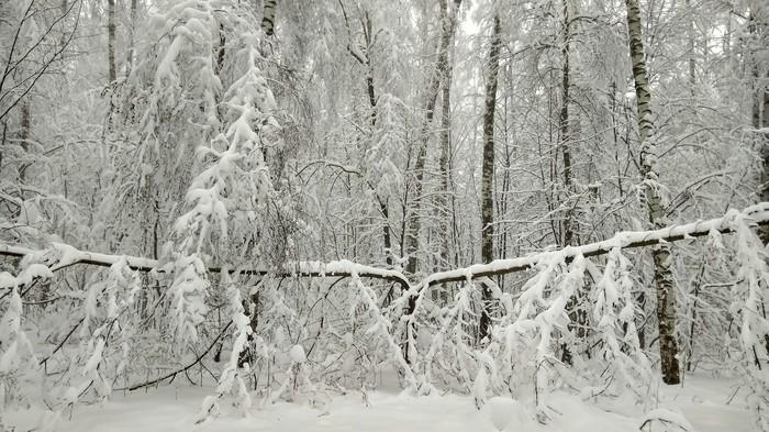 Зимний лес Зима, Лес, Снег, Красота, Длиннопост