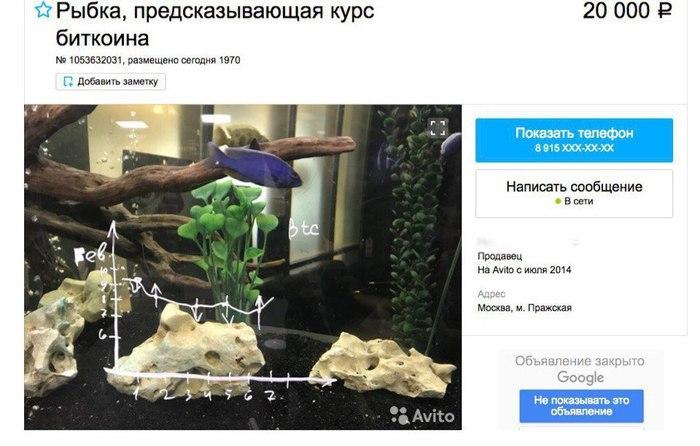 рыбка биткоин
