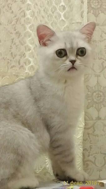 Кот наркот Кот, Упоротый, Wtf