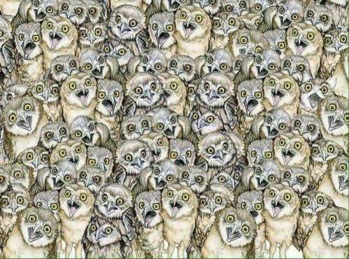 Найди кошку Загадка, Не мое, Интересное
