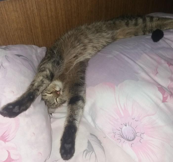 Когда хорошо спится,в любой позе)