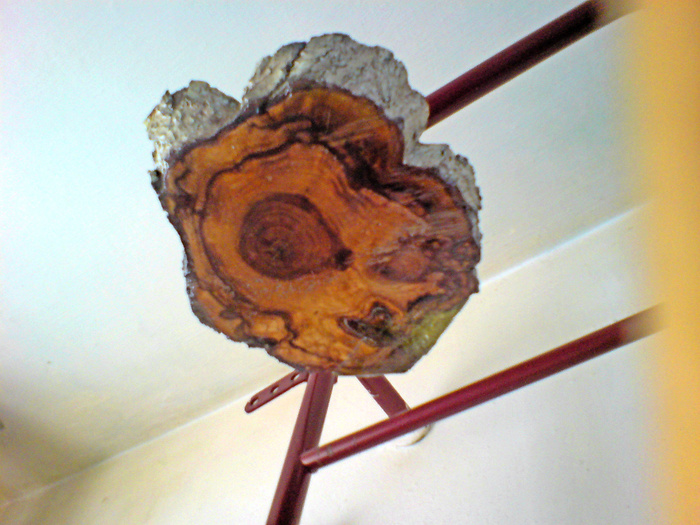 Парочка люстр из пеньков абрикоса. Дерево, Люстра, Своими руками, Длиннопост