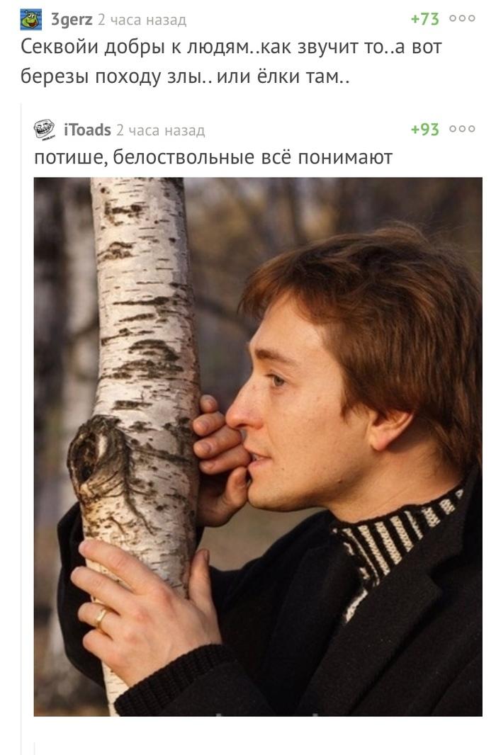 Аккуратней в лесу Комментарии, Секвойя, Березы, Безруков, Скриншот
