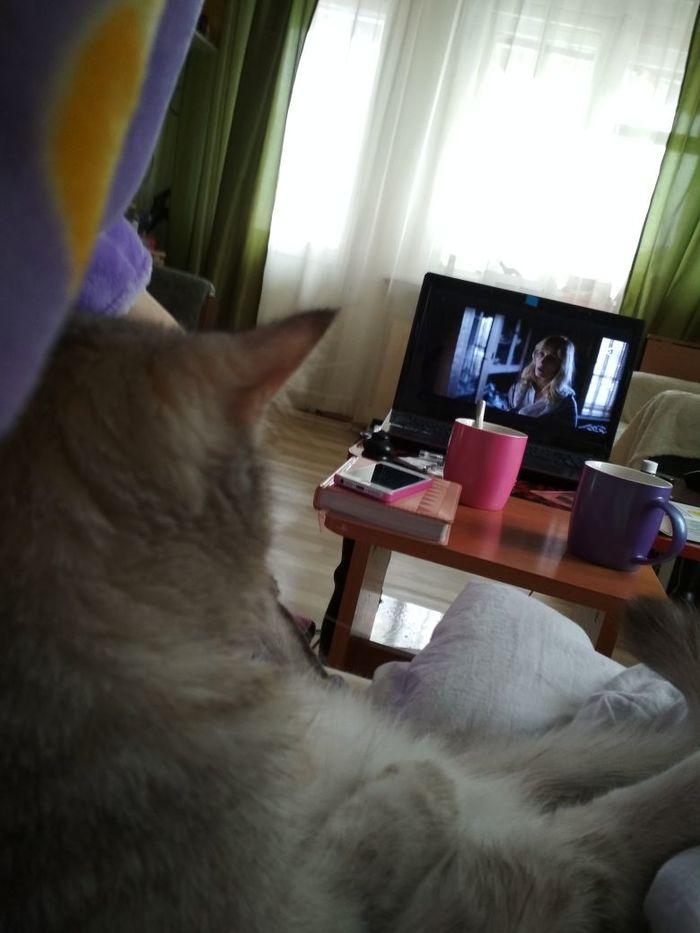 Пока одна дома Кот, Телевизор, Моё, Длиннопост