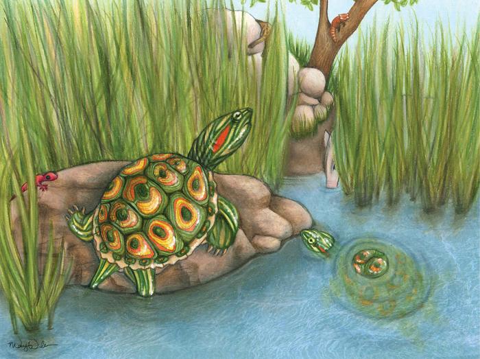 Предок черепашек ниндзя? В США обнаружили древнего родственника самой популярной домашней черепашки Палеонтология, Биология, Пресмыкающиеся, Черепаха, Красноухая черепаха, Наука, Животные, Природа, Длиннопост