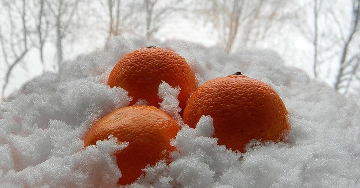 картинки апельсины на снегу слушайте, что человек
