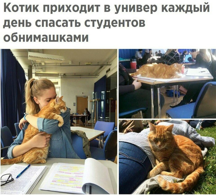 Котик антистресс Кот, Антистресс, Студенты, Нагло стырено из вк