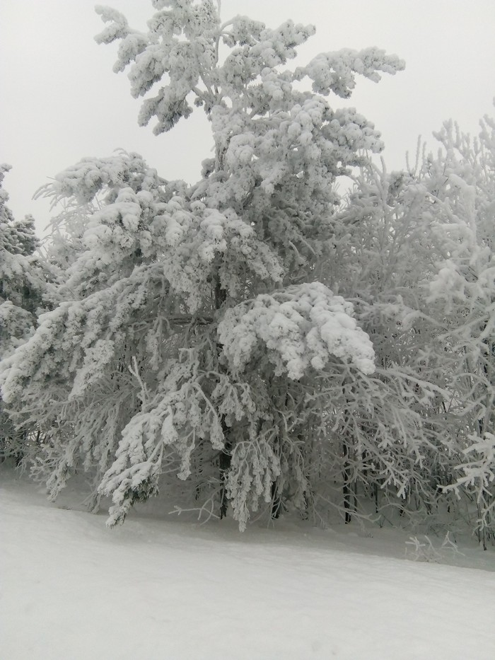 Зимний лес Лес, Регион 18, Фотография