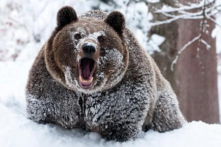 Храп, как средство пробуждения Медведь, Страшный сон, Семья, Храп