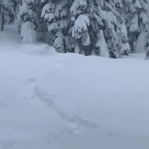 Когда много снега, но ты очень любишь лыжи