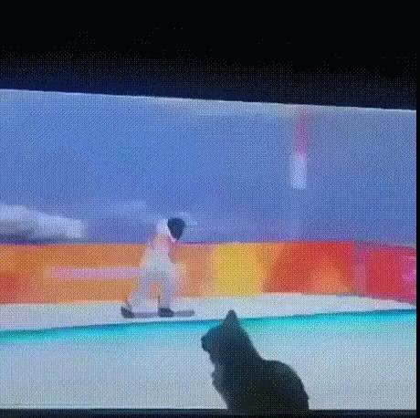 Кот ну очень хочет помочь спортсмену
