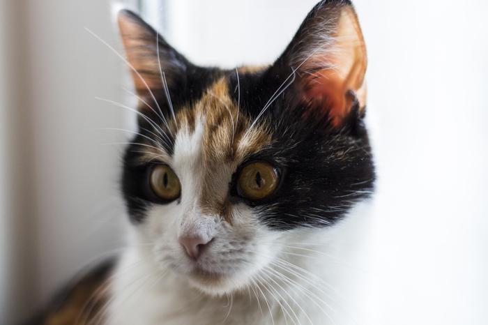 Немного кошки в ленту Кот, Фотография