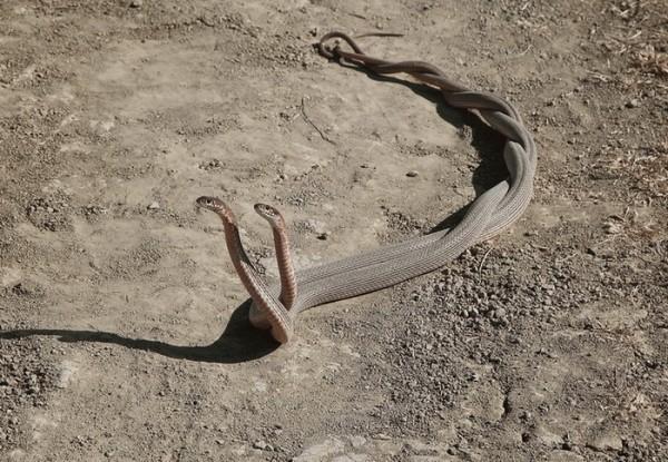 Хуй змии