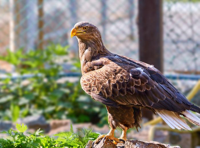 Обещанный пост про птиц Челябинский зоопарк, Птицы, Длиннопост, Животные