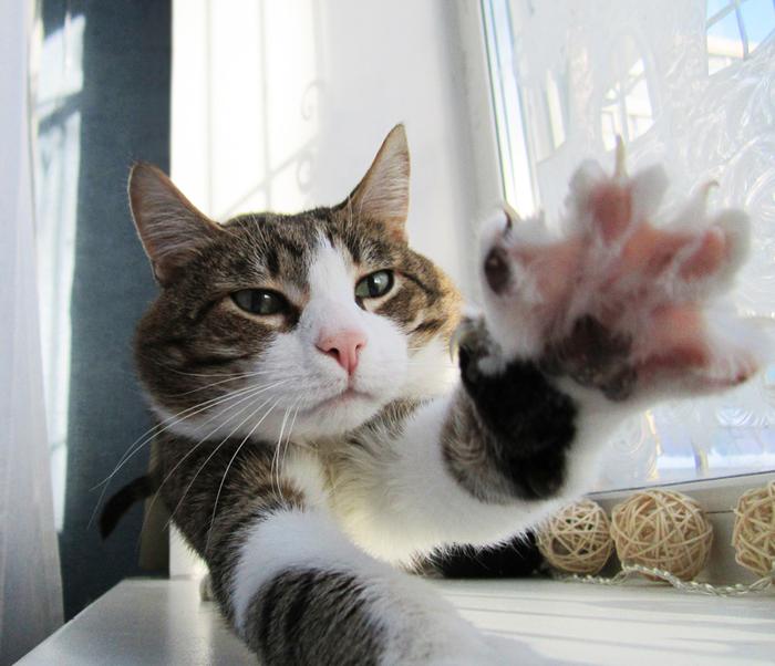 Держите пятюню! Кот, Милота, Дай пять, На удачу