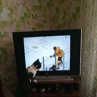 Кот болельщик Хоккей, Кот, Финал, Гифка, Олимпиада, Телевизор, Спорт, Болельщики