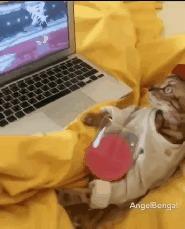 Кот знает толк в извращениях