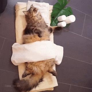 СПА для котика