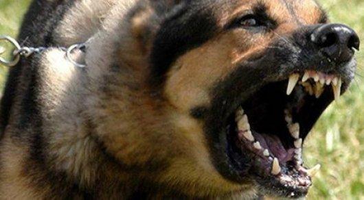 Томичка отсудила 23 тыс руб морального вреда у хозяина напавшей на нее овчарки Новости, Томск, Моральный вред, Суд, Собака, Негатив