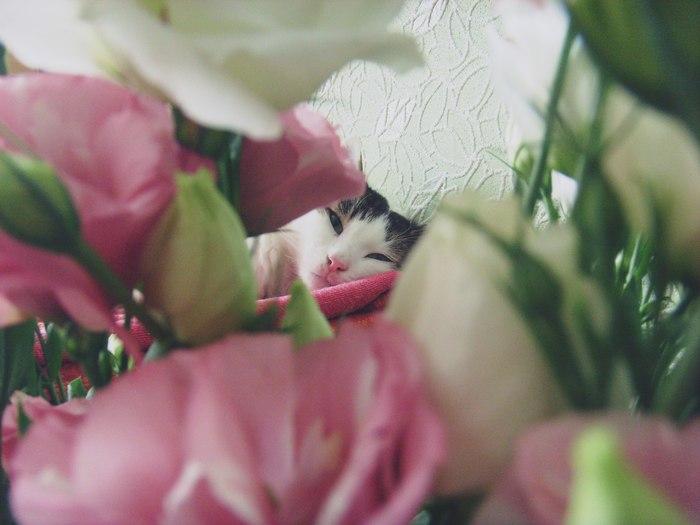 Весна! Кот, Весна, День кошек