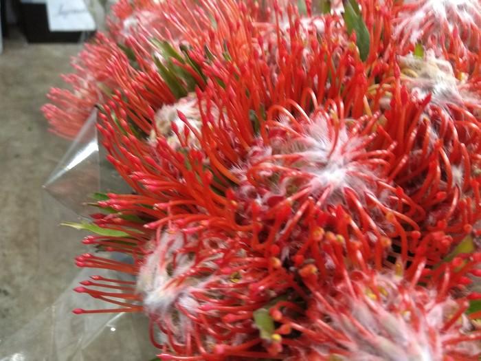 Немного фото цветов к 8 марта) 8 марта, Весна, Цветы, Красота, Работа, Длиннопост