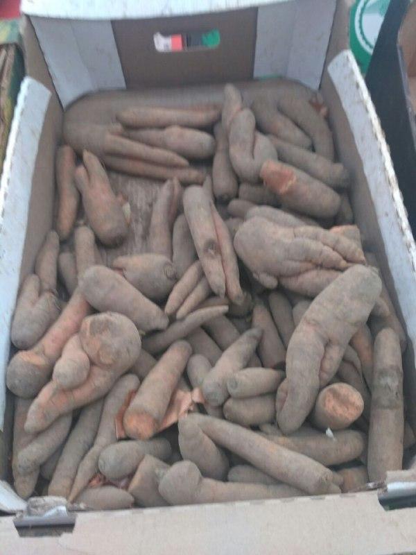 Морковка в карусели Санкт-Петербург, Морковь, Мутант, Длиннопост, Магазин, Фотография