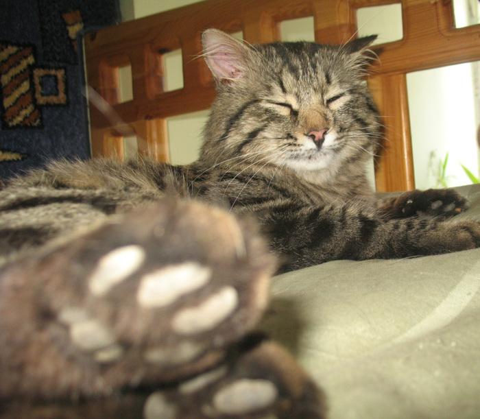 Ребус - самый импозантный кот в моей жизни Кот, Котомафия, Длиннопост