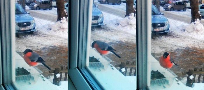Кормушки для птиц Синица, Снегири, Кормушка, Зима, Кто это?, Длиннопост