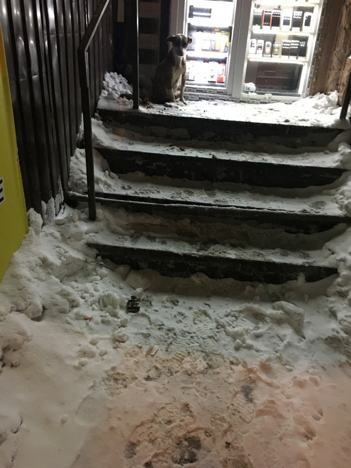 Собака замерзает на вокзале Днепр Украина Собака, Помощь животным, Днепр, Днепропетровск, Помощь, Без рейтинга