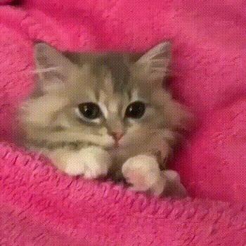 Котика вам в ленту