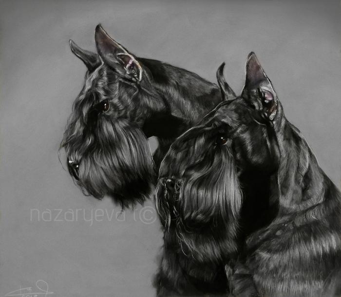 Портрет бородачей Собака, Цвергшнауцер, Картина, Пастель, Видео