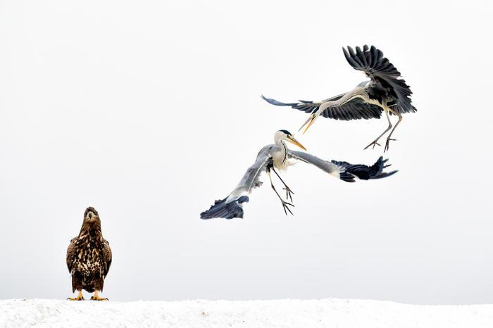 Свидетель. Птицы, Фотография