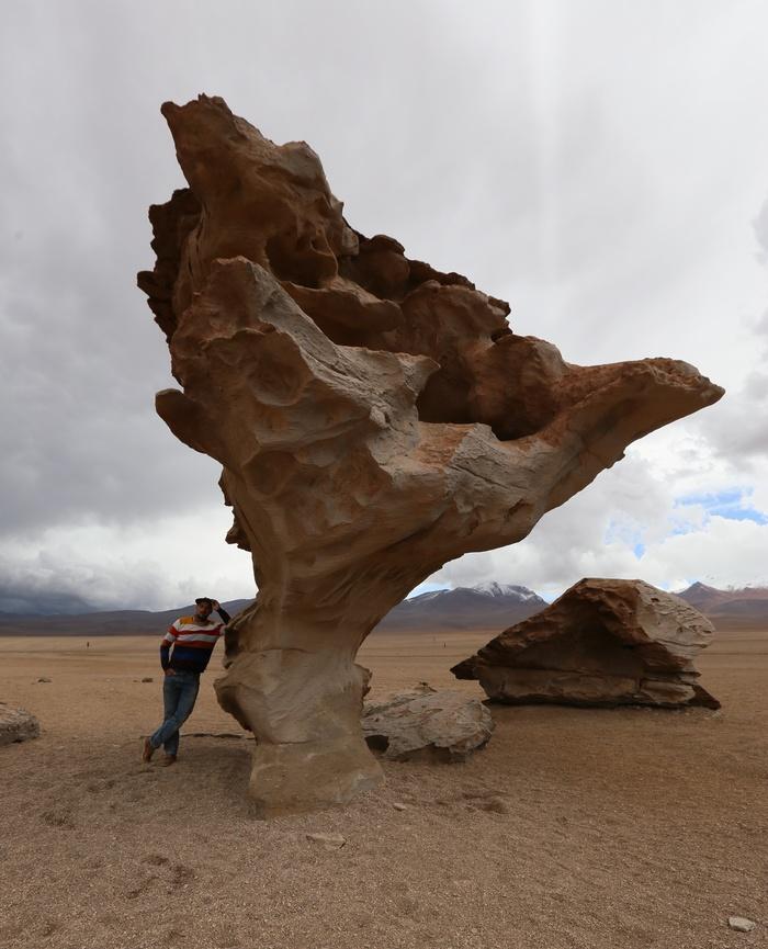Камень дерево или Арбол De Piedra Камень дерево, Камень или дерево, Боливия, Латинская Америка