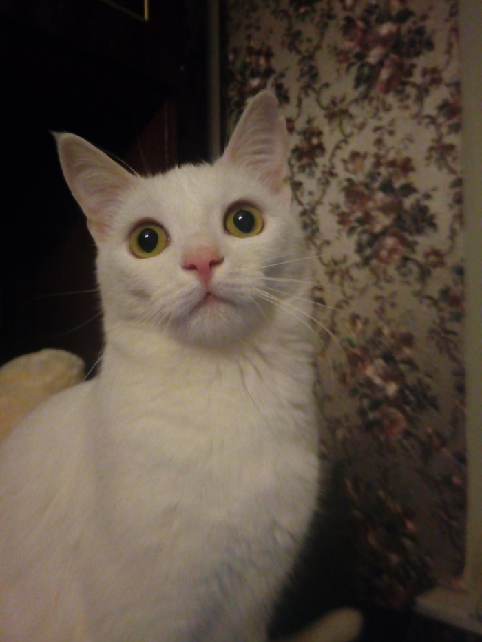 Мой маленький демон и любимый ковер ) Домашние животные, Кот, Ковер, Длиннопост