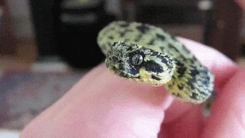 Мяу!! Милая змейка