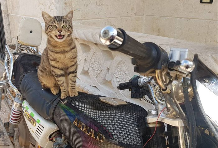 Фотографии из знаменитого кошачьего приюта в Алеппо, где нашли убежище домашние коты погибших или бежавших из города жителей. кот, Сирия, Алеппо, приют, длиннопост