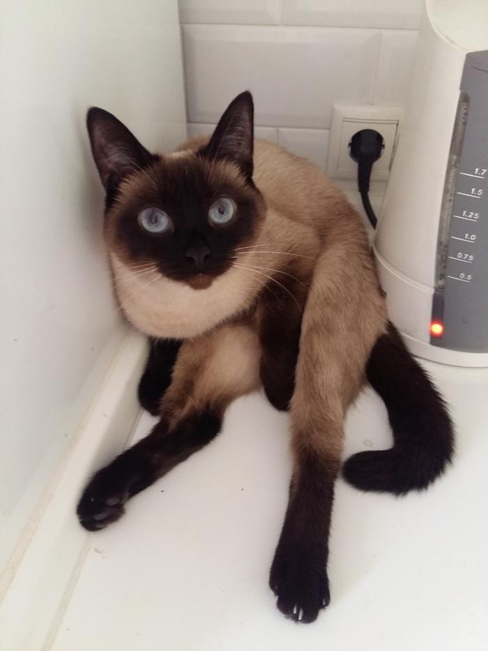 Кто у чайника сидит и удивлённо так глядит?) Кот, Тепло, Место, Тайка, Любимая, Девочка