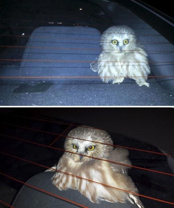 """""""Однажды в Лас-Вегасе в мою машину залетела сова, когда я ехал с открытыми окнами.Я буквально потратил целых 3 часа, чтобы выгнать её"""""""