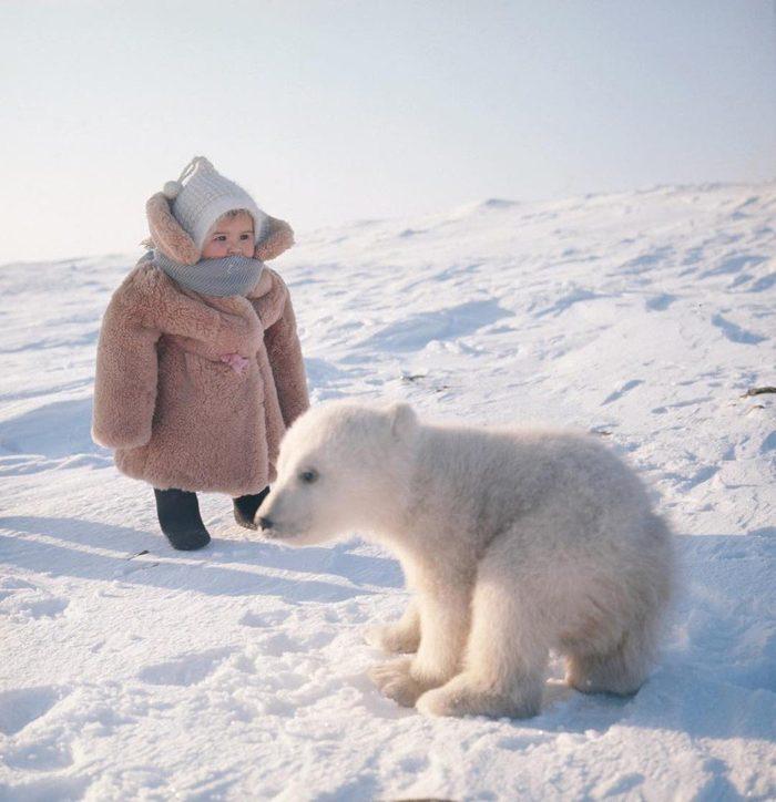 Ребенок человека встретил ребенка медведя на острове Врангеля. остров Врангеля, медведь, Дети