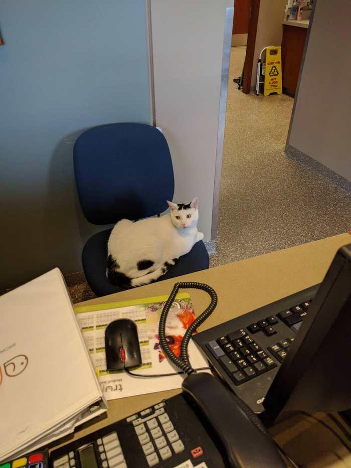Администратор в местной клинике для животных.