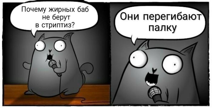 Стендап кот