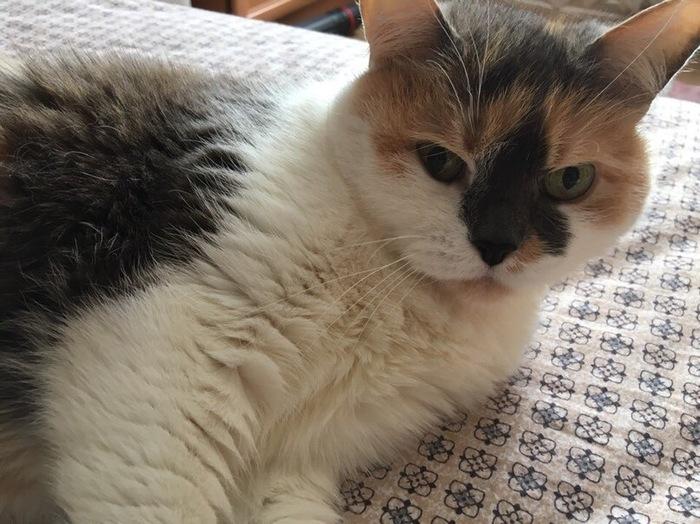 Мой котя Кот, Усылапыхвост