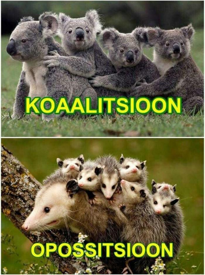Коалиция - оппозиция