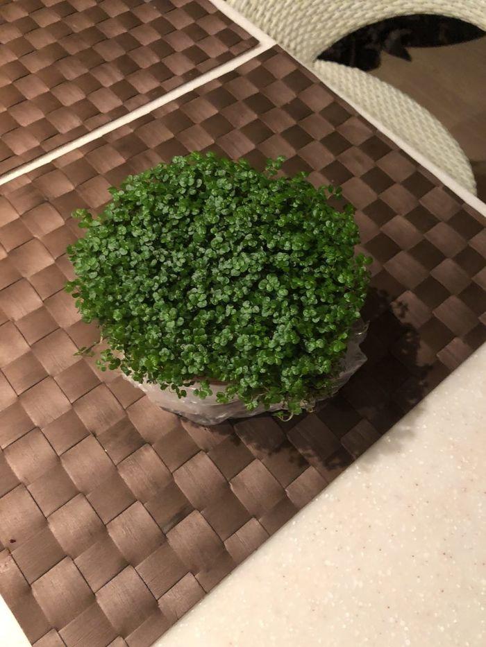 Что за растение? Растения, Зелень, Ботаника